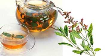 Ada Çayının Faydaları