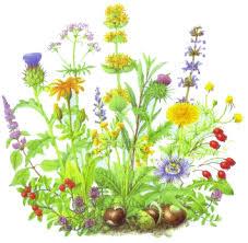 Afrodizyak bitkiler