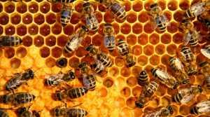 Bal arısı antibiyotikten daha değerli