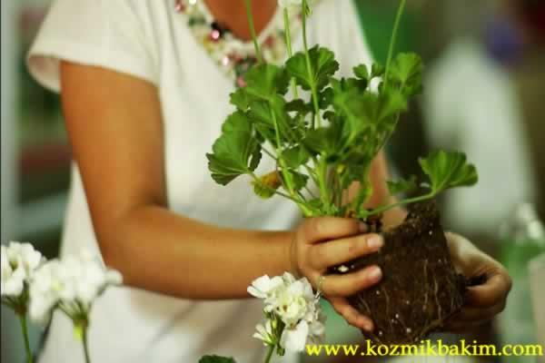 Vazo çiçeklerinin bakımı nasıl yapılmalı