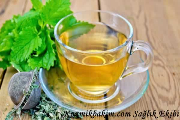Melisa Çayının Faydaları, Zararları ve Nasıl Demlenmelidir?